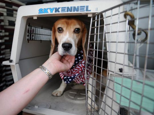 Dozens of dogs spilled out of bankruptcy testing