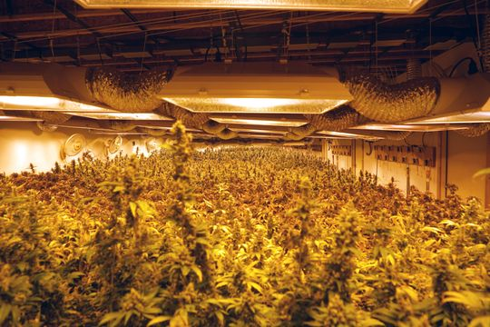 Marijuana products and plants appear in The Green Solution publishing company in Denver, Colorado.