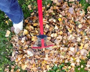The best way to deal with falling leaves