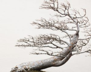 Bonsai masters share their ancient secrets