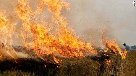 Burning crops is one of the largest sources of pollution in northern India.