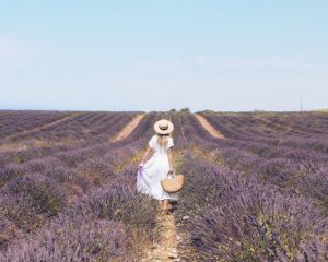 Where to find sunflower and lavender fields in Provence • Blonde on the outside