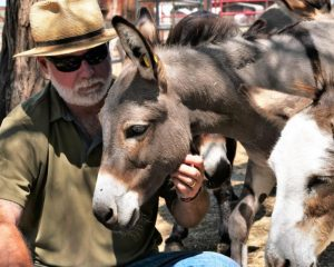 Inside the country's largest sanctuary for abused and neglected donkeys