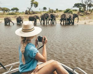 Ethical Animal Meetings Around the World (and How to Find Them)