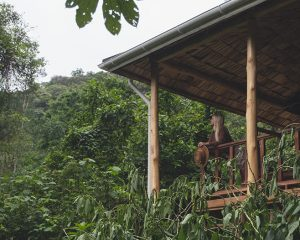 Accommodation at Sanctuary Retreats Gorilla Forest Camp in Uganda • The blonde abroad